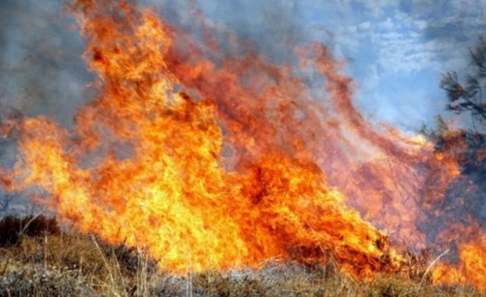 45 hurma ağacı yandı