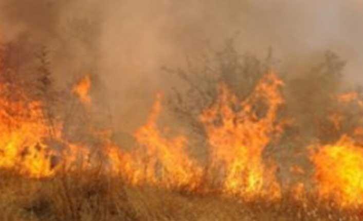 50 dönüm biçilmemiş arpa yandı