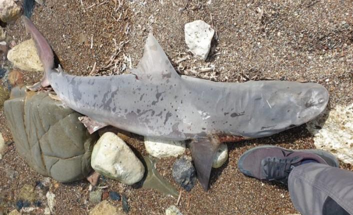 Baf'a bağlı Poli Hrisohu'da kıyıya köpekbalığı ölüsü vurdu