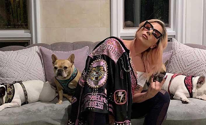 Lady Gaga'nın köpeklerinin çalınmasıyla ilgili 5 kişi gözaltına alındı