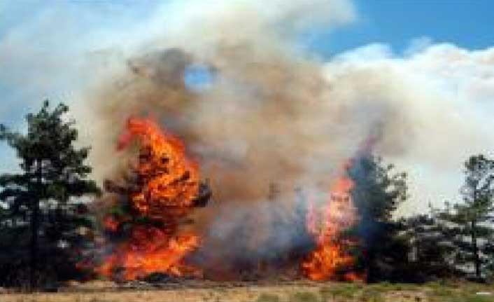 Çam ağaçları cayır cayır yandı