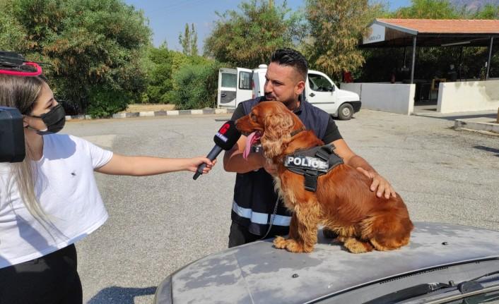 Dedektör Narkotik Köpekler Başarılarına Başarı Katıyor