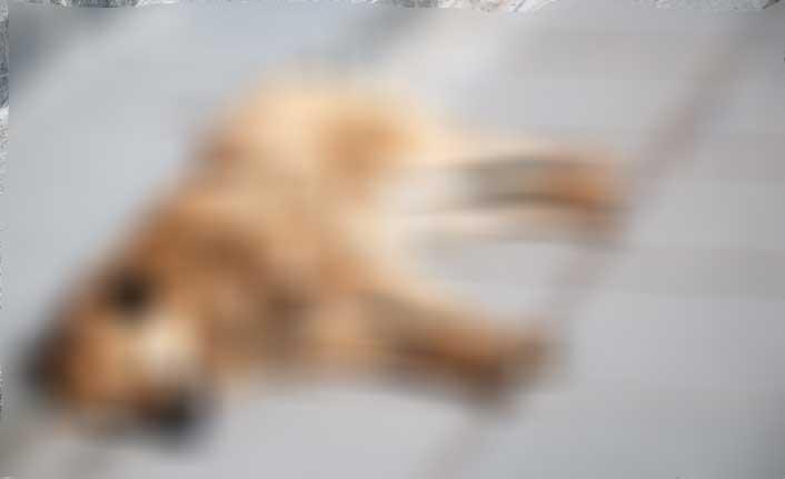 Köpeği döverek öldürdü
