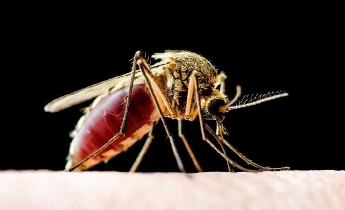 Küresel ısınma nedeniyle ölümcül hastalıktan 27 milyon kişi etkilenecek