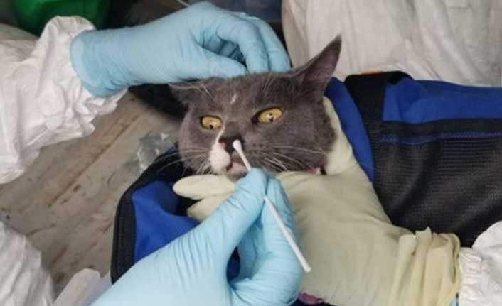 Rusya'da hayvanlar için koronavirüs antikor testi geliştirildi
