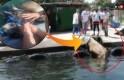 Kasımpaşa'dan denize atlayan kurbanlık dana Balat sahiline kadar yüzdü