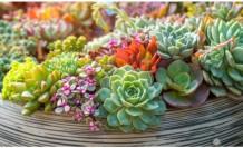 Evde bakılması tehlikeli 7 iç mekan bitkisi