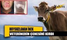 Şap aşısı yapılan inek, veterinerin çenesini kırdı