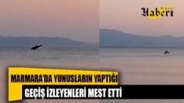 Marmara'da yunusların yaptığı geçiş izleyenleri mest etti