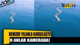 Denizde yılanla karşılaştığı anlar kamerada