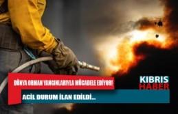 Dünya orman yangınlarıyla mücadele ediyor! Acil durum ilan edildi...