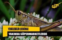 Yenilebilir böcekler yakında süpermarketlerde