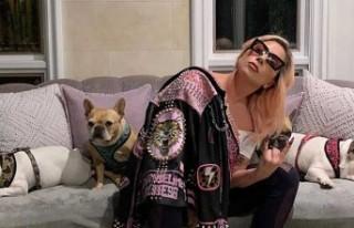 Lady Gaga'nın köpeklerinin çalınmasıyla...