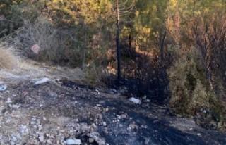 Çatalköy'de ormanlık arazide yangın çıktı