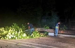 İstanbul'da ağaç yola devrildi: 1 yaralı