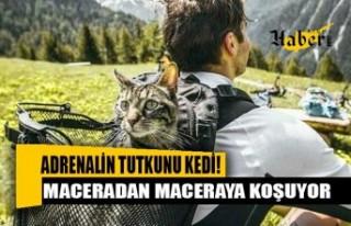 Adrenalin tutkunu kedi! Sahibiyle birlikte maceradan...