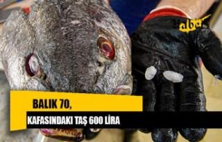 Balık 70, kafasındaki taş 600 lira