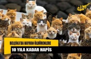 Belçika'da hayvan öldürenlere 10 yıla kadar...