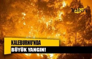 Kaleburnu'nda Büyük Yangın!