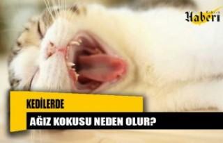 Kedilerde ağız kokusu neden olur?
