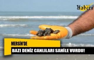 Mersin'de bazı deniz canlıları sahile vurdu!