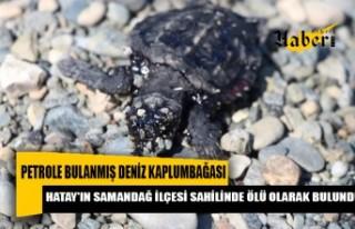 Ölü deniz kaplumbağası bulundu