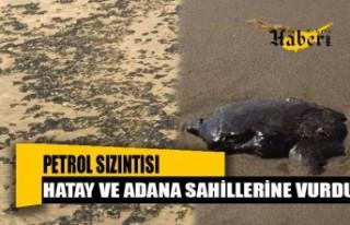 Petrol Sızıntısı, Hatay ve Adana Sahillerine Vurdu