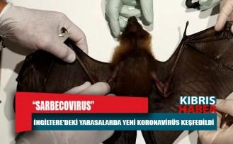 İngiltere'deki yarasalarda yeni bir koronavirüs keşfedildi: Sarbecovirus