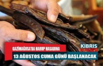 Gazimağusa'da Harup Hasadına 13 Ağustos Cuma Günü Başlanacak