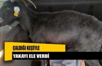Hırsızlık şüphelisi, çaldığı keçiyle yakalandı