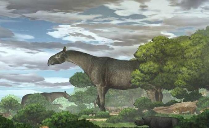 """Çin'de zürafadan daha uzun """"gergedan"""" fosili bulundu"""